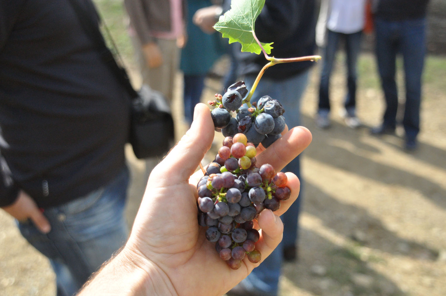 WINE TOURS - Ferme Il Molinello